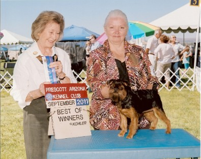 Paragons Brussels Griffons Of Excellence